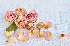 Rose rosa asciutte sopra il fondo bianco del pizzo Immagine Stock