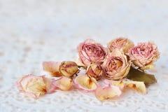 Rose rosa asciutte sopra pizzo bianco Immagine Stock