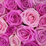 Rose rosa come fondo, struttura Immagini Stock Libere da Diritti