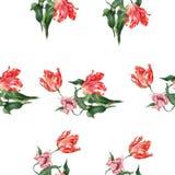 rose rosa dell'acquerello Fotografia Stock