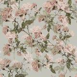 Rose rosa dell'acquerello su un fondo grigio Reticolo senza giunte floreale Fotografie Stock Libere da Diritti