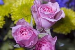 Rose rosa dell'innamorato Immagini Stock Libere da Diritti