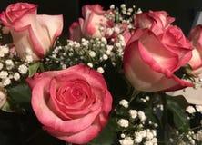 Rose rosa e bianche immagini stock