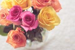 Rose rosa e gialle Fotografia Stock Libera da Diritti