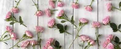 Rose rosa su fondo di legno fotografia stock libera da diritti