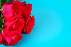 Rose rosa su un fondo blu, su carta pastello Copi lo spazio per testo Modello per l'8 marzo, festa della Mamma Immagini Stock