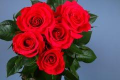 Rose rosa su un fondo grigio, su carta pastello Copi lo spazio per testo Modello per l'8 marzo, festa della Mamma Fotografie Stock