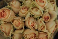 Rose , Rosaceae Stock Photo