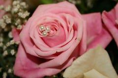 Rose rosada Imágenes de archivo libres de regalías