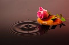 Rose rosada con las gotitas imagenes de archivo