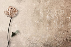 Rose rosada de muerte Fotografía de archivo libre de regalías