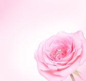 Rose rosada romántica con el anillo de diamante Imagen de archivo libre de regalías