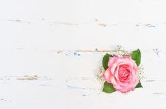 Rose rosada romántica en el fondo de madera blanco Imagenes de archivo