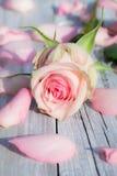 Rose rose Stock Photos
