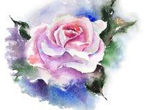 Rose rose Photos stock