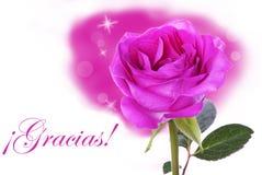 Rose rose avec Gracias Photos libres de droits