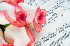 Rose rose et note Photographie stock