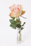 Rose rose in glass vase on white Royalty Free Stock Photography