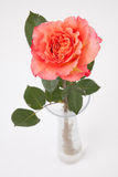 Rose rose in glass vase on white Royalty Free Stock Images