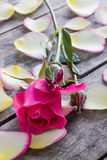 Rose and Rose petals lying down on a wooden table Stock Photo