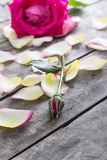 Rose and Rose petals lying down on a wooden table Stock Photos