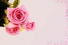 Rose roses on the pink background Stock Photography