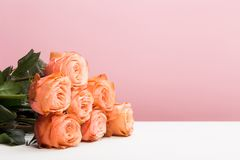 Rose roses on pink , flat lay stock images