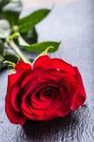 Rose Roses rouges Bouquet des roses rouges Plusieurs roses sur le fond de granit Jour de valentines, fond de jour du mariage Image stock