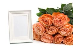Rose roses with text place isolated on white background - Image stock photography