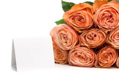 Rose roses with text place isolated on white background - Image stock images
