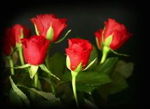 Rose rosse Fotografie Stock