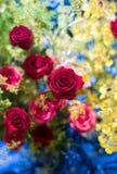 Rose rosse Immagini Stock
