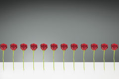 12 rose rosse Fotografia Stock