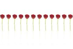 12 rose rosse Fotografie Stock Libere da Diritti