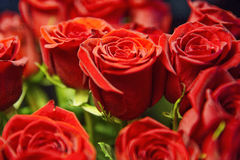Rose rosse Fotografie Stock Libere da Diritti