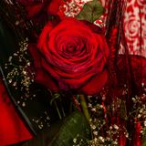 Rose rosse come regalo Fotografia Stock