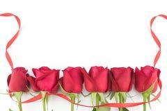 Rose rosse con il nastro rosso Immagini Stock Libere da Diritti