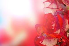 Rose rosse con il tramonto del bokeh Immagini Stock