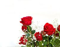Rose rosse con lo spazio del testo Fotografia Stock Libera da Diritti