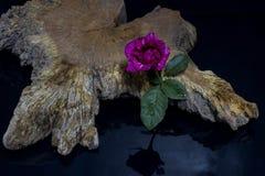 Rose rosse con vecchio legno Fotografia Stock