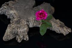 Rose rosse con vecchio legno Fotografie Stock