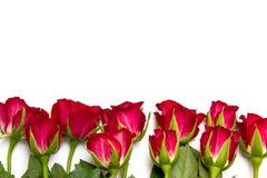 Rose rosse da sotto Immagini Stock