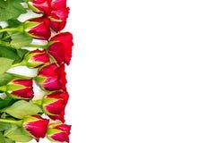 Rose rosse da un lato Fotografia Stock