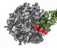 Rose rosse del carbone tagliate Immagine Stock Libera da Diritti