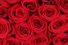 Rose rosse del fondo il giorno di madri o del biglietto di S. Valentino Fotografie Stock