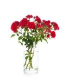Rose rosse del giardino in un vaso su bianco Immagini Stock
