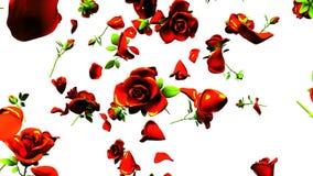 Rose rosse di caduta su fondo bianco illustrazione vettoriale
