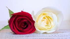 Rose rosse e bianche Immagini Stock
