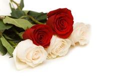 Rose rosse e bianche isolate Immagine Stock