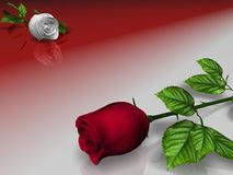 Rose rosse e che imbiancano illustrazione di stock